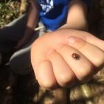 Team Bonding Activities Derbyshire - Education Woodland Adventures