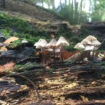 foraging in wood for fungi